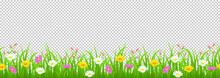 Flowers And Grass Border, Yellow And White Chamomile And Delicate Pink Meadow Flowers And Green Grass On Transparent Background, Vector Illustration, Greeting Card Decoration Element, Graphic Drawing