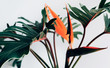Leinwandbild Motiv Exotic tropical flower strelizia and xanadu leaves on white background.nature concepts