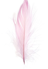 Beautiful Pink Feather On A Wh...