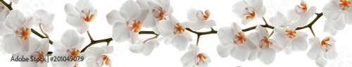 Poster Orchidée Orchid branch with flowers