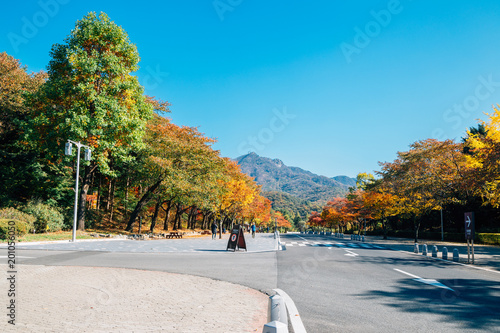 Autumn maple tree street in Seoul grand park, Korea Poster