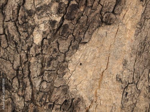 Photo sur Toile Les Textures Tree bark texture