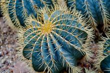 Round Shaped Cactus. Cactus De...