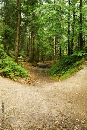Photo Stands Road in forest Dzika przyroda