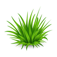 Thick Bunch Of Green Grass Isolated On White Background