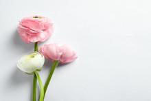 Beautiful Ranunculus Flowers O...