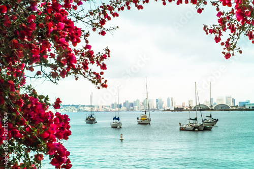 Photo  Flower and water scene with boats along scenic San Diego waterfront with skyline