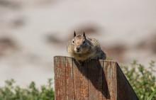Squirrel Guarding His Beach