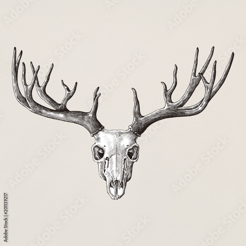 Hand drawn deer antler isolated Fototapete
