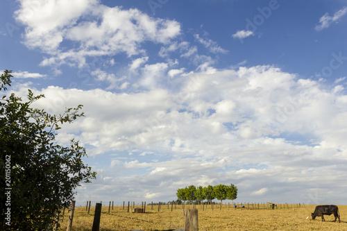 Fotografie, Obraz  pasto na fazenda