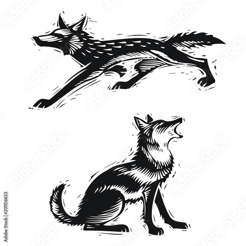 Coyote Fototapete