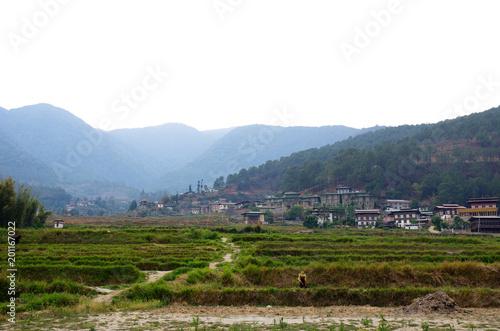 Poster Olive ブータンの農村風景