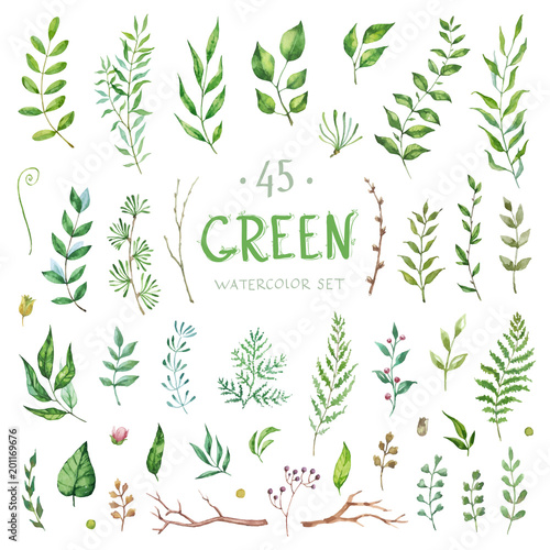 Vector Big Set watercolor elements - herbs and leaf. Collection garden, wild foliage, flowers and branches. Illustration isolated on white background. Green. Wall mural