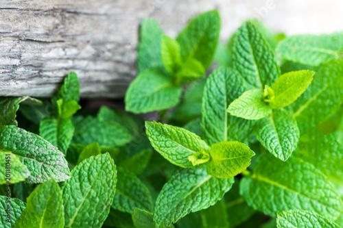 Foto auf Gartenposter Aromastoffe Fresh mint leaf, lemon balm herb on wooden background with copyspace, close up.