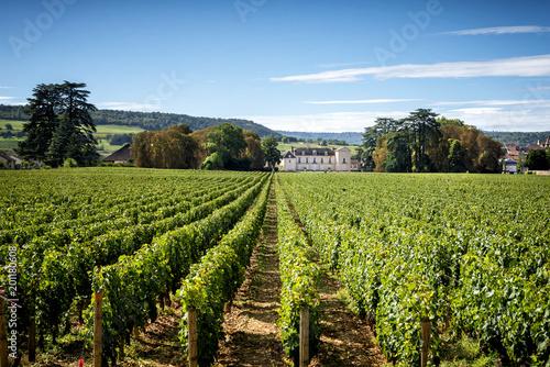 Fotografia  Borgogna, Montrachet. Chateau de Meursault. Cote d'Or. France