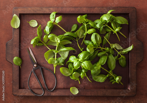 Obraz fresh basil herb on brown background - fototapety do salonu