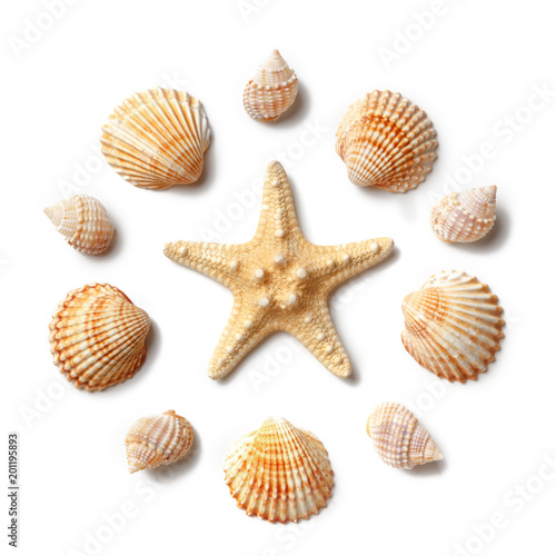 Fotografía  Pattern of seashells and starfish isolated on a white background.