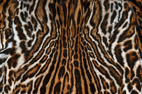 leopard background texture