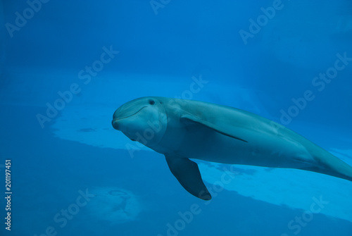 Fototapety, obrazy: Dolphin, from my window, I see you