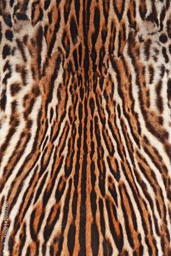 Deurstickers Luipaard leopard background texture