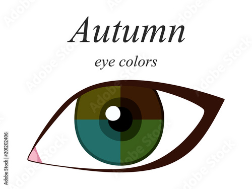 Obraz Stock vector seasonal color analysis palette for autumn type of female appearance. Eye colors for autumn type.  - fototapety do salonu