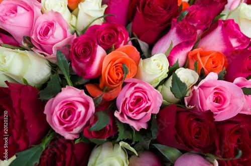 mélange de roses Canvas Print