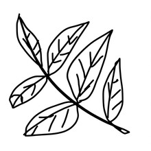 Contour Drawing Of A Branch Wi...
