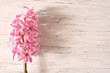 hiacynt, kwiat, roślina, różowy hiacynt kwitnący, beuty, flora, wiosna, swieży, makro, bukiet, kwitnienie, list, papeteria, kompozycja, kwiatowa, układ kwiatów, vintage, flower, shabby chic