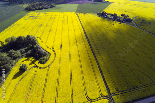 Poster Jaune Aerial view of agricultural fields in summer evening, Latvia.