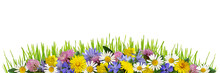 Wild Flowers And Green Grass I...