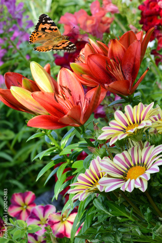 Staande foto Koraal Blumen 937