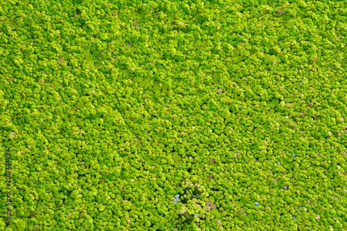 Foto op Plexiglas Groene water bloom