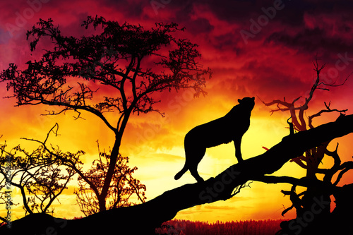 silhouette of cheetah on tree at suset