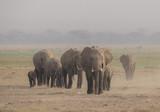 Elefantenherde im Dunst