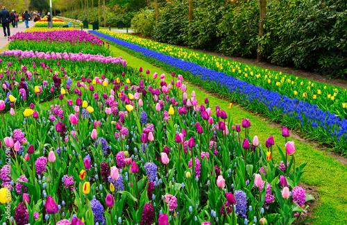 Foto op Plexiglas Groene Formal spring garden