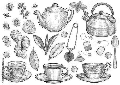 Fototapeta Collection of tea illustration, drawing, engraving, ink, line art, vector