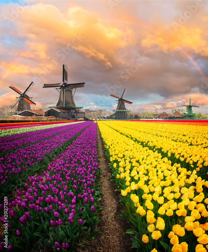 Photo  Dutch wind mills