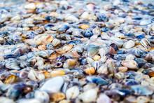 Bean Clams On The Beach