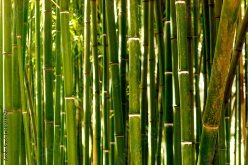 Foto op Canvas Bamboo Bamboo