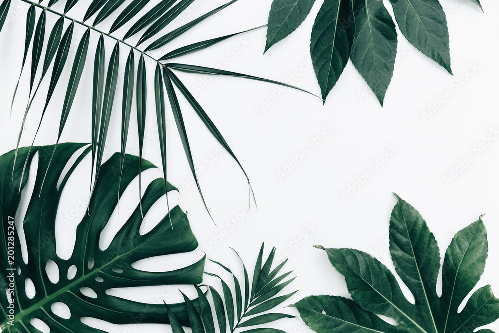 Fototapety, obrazy: Tropical trendy background. Leaves over white background