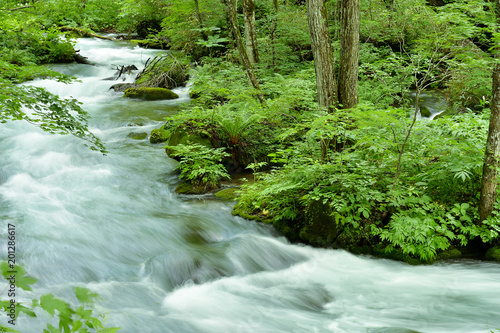 Fotografering  新緑の渓流