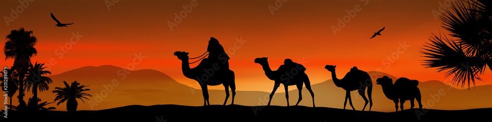 Fototapeta Camel caravan on sunset
