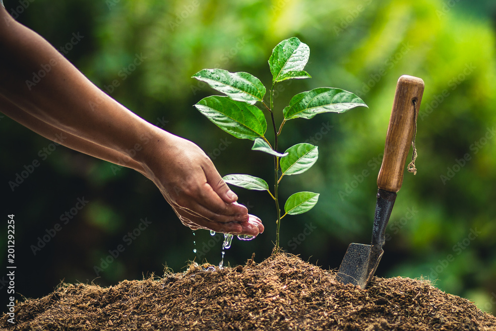 Planting trees passion fruit hands watering and good quality soil