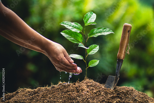 Obraz na plátne Planting trees passion fruit hands watering and good quality soil