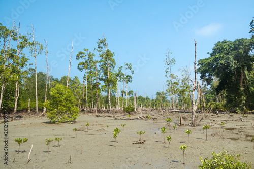 In de dag Bomen Stunning view of Havelock Island Beach, beautiful tree in the sea water,