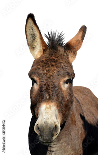 Portrait of a donkey isolated on white background.