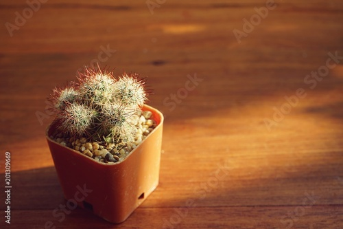 Deurstickers Cactus Little cactus pot plant on wooden table with warm morning light