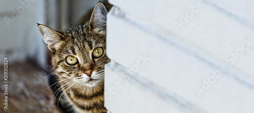 Fotografiet  cat, domestic pet, animal, playful, domestic, breed, female