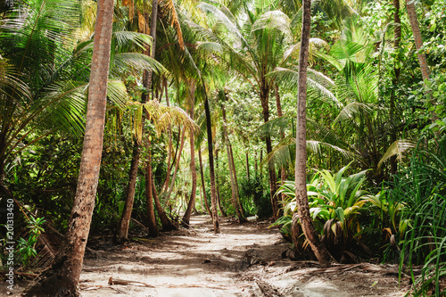 La pose en embrasure Brun profond Tropical jungle with tall green palm trees