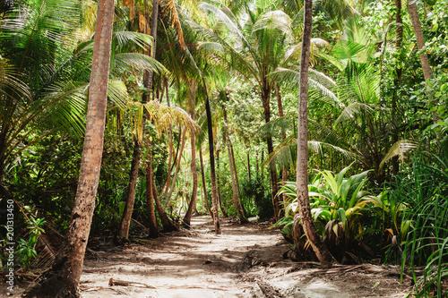 Photo sur Aluminium Brun profond Tropical jungle with tall green palm trees
